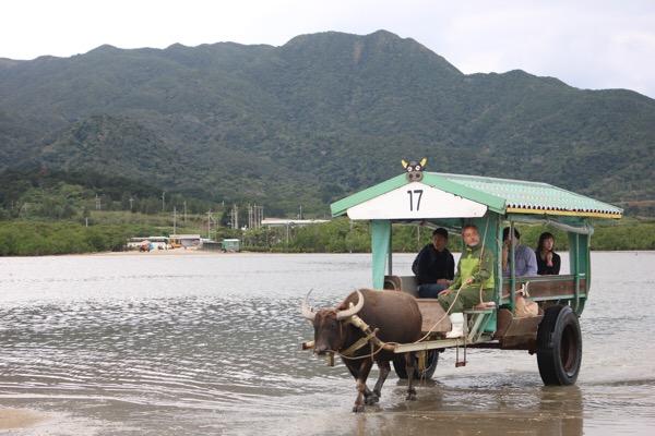 西表島到着!昼得ツアーで、マングローブクルーズと由布島を満喫。由布島で水牛車に乗り、植物園へ〜年末に行く、離島旅2017-2018〜
