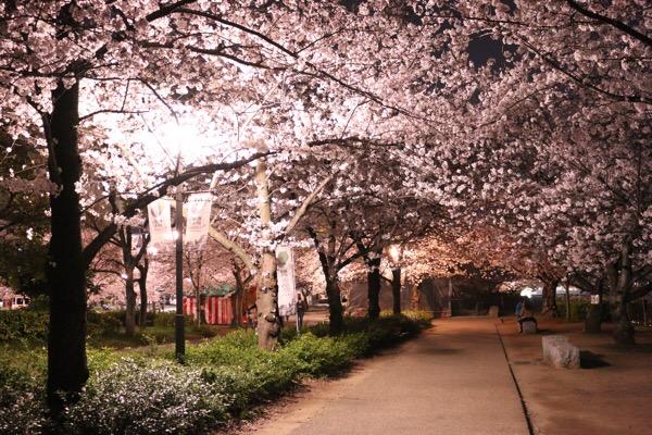 大阪城でお花見を楽しむ〜Q's モールで買い出しして夜桜の下でパーティ〜
