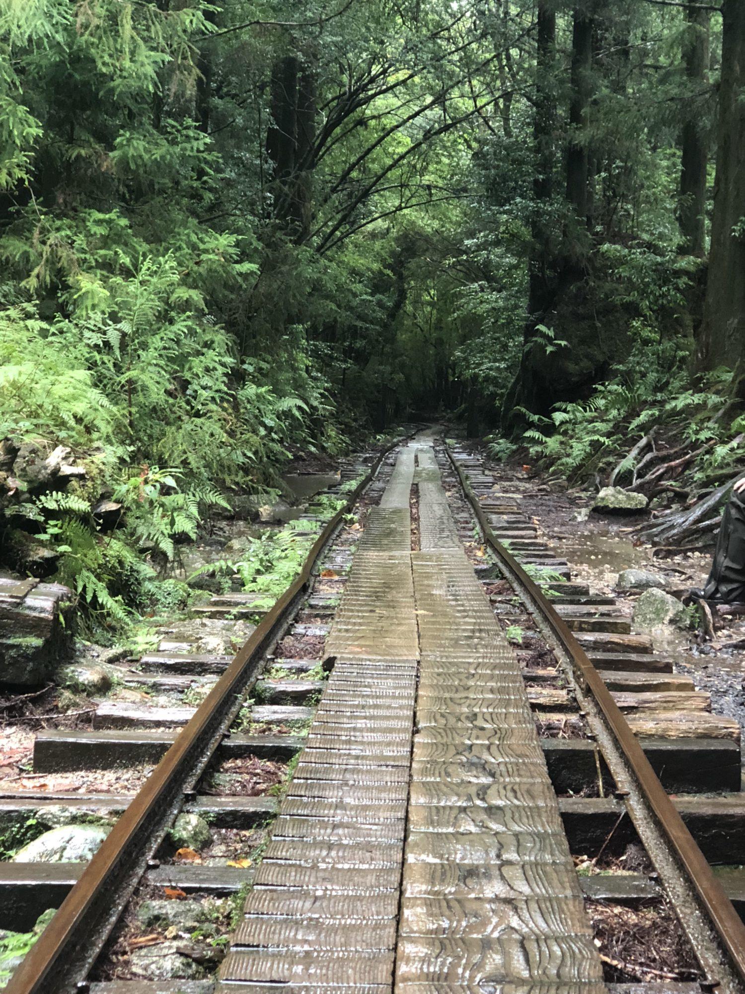 屋久島で縄文杉まで歩ききった!