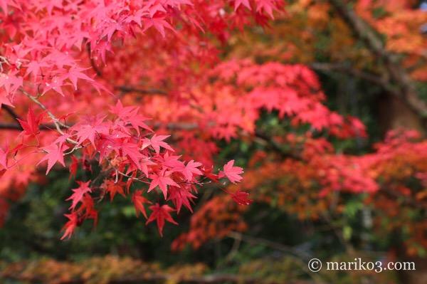 紅葉シーズン、哲学の道を歩いて永観堂へ。かなりの人だったので、外観だけ楽しむ