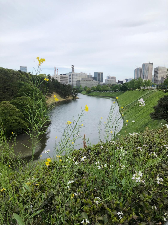 武道館でのライブ前に武道館から皇居を歩いて一周ぐるっと回ってみたら約1時間半かかった